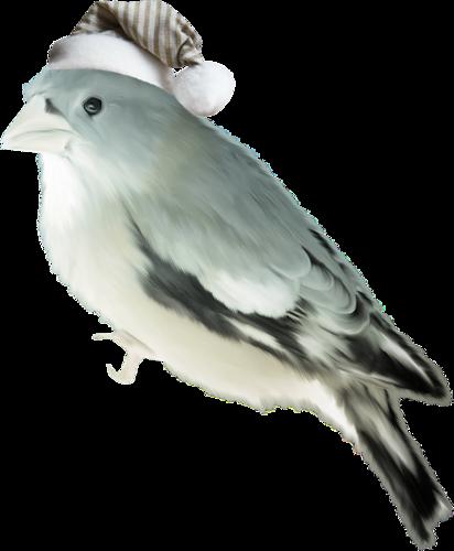 Petit oiseau avec bonnet de noel for Petit oiseau avec houpette
